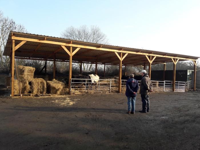 rutland-ahimsa-cows-barn-1